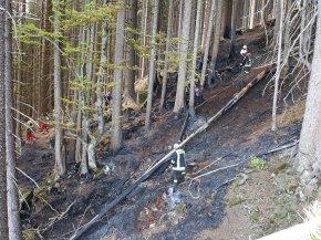 Waldbrandfläche Zunkleite