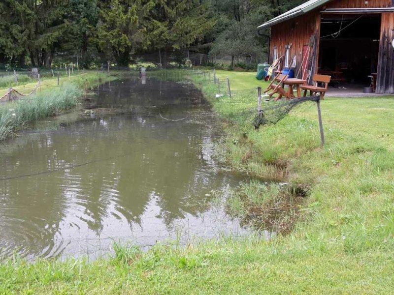 Fischzucht Wertachtal Teich