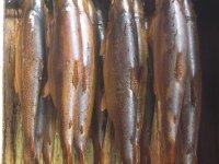 FischzuchtRäucherei