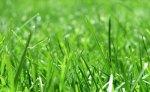 Ein schöner Rasen bedarf guter Pflege!