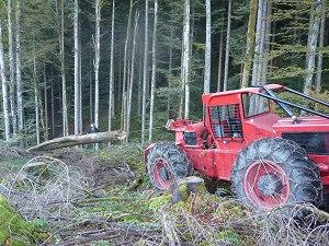 Pecher Oberstdorf - Forstarbeiten