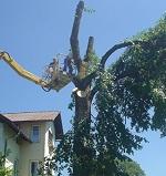Baumzuschnitt mit Hilfe einer Hebebühne