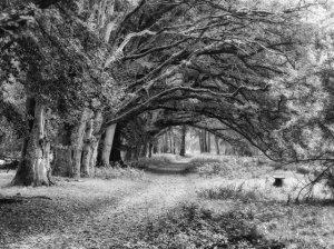 Filterfotografie, Michael Zober-Frede
