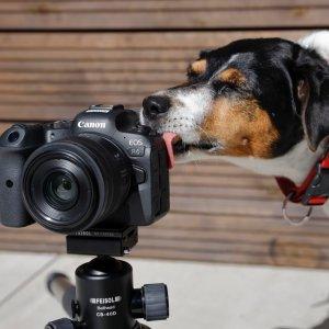 Hundefotografie - Petra Selbertinger