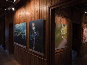 Ausstellung M. und D. Benz - Foto: René Zieger