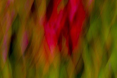 ZEN-ART Blumen - H. J. Netz (9)