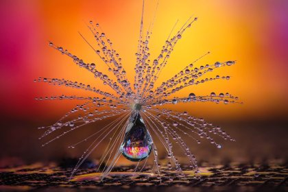 CEWE Photo Award Category winner Little Dandelion umbrella by Petra Jung Nature
