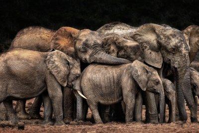 CEWE Photo Award Category winner The Clan cuddles Josef Schwarz Animals