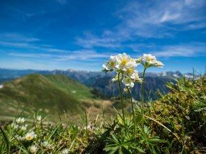 Landschaftsfotografie auf dem Fellhorn