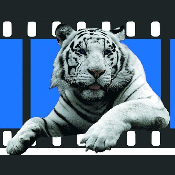 Logo-Tiger-Journal