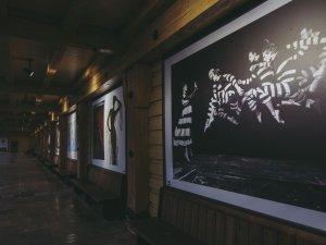 Ausstellung Kristian Schuller - Foto: René Zieger