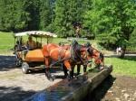 Kurze Rast am Brunnen für unsere Pferde