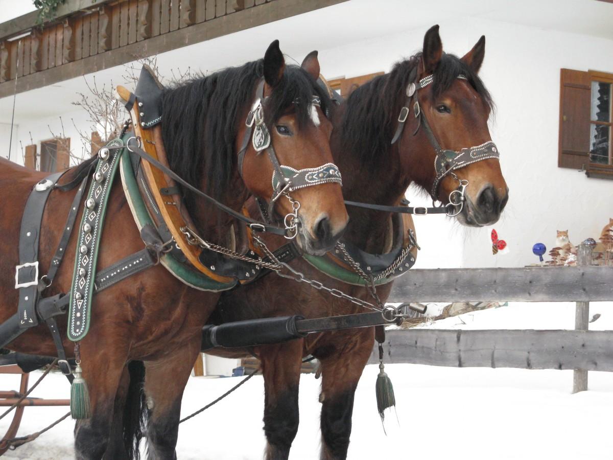 Pferde stehen zur Abfahrt bereit