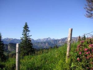 Alpenrosen u. Berge