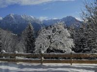 Apfelbaum im Winterrock