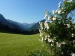 Rosengarten/Trettach