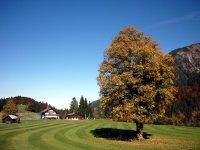 Clubhaus mit Ahornbaum (c) Golfclub Oberstdorf e.V.
