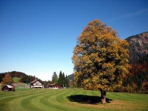 Clubhaus mit Ahornbaum Fw. 5/14
