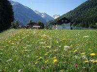 Alpenländische Flora entlang der Fairways