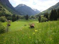 Alpenflora entlang der Fairways