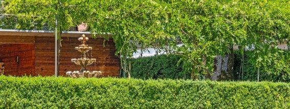 Blick vom Garten zum übergrünten Eingang