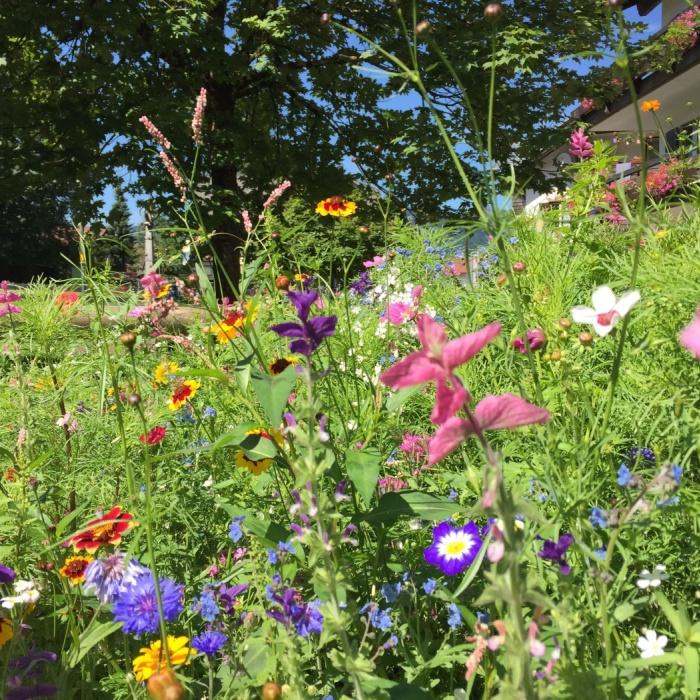 Blumenschmuck am Kohlplätzle