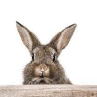 Hase-Kaninchen-620x330