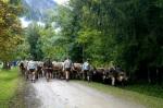 Viehscheid im Allgäu