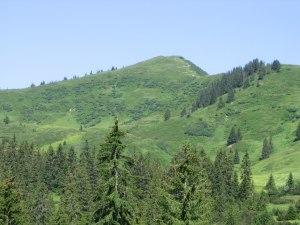 Rund um die Berghütte Grasgehren