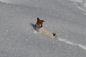 Gaudi im Schnee!