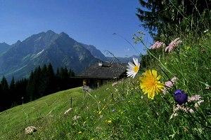 Sommer, Sonne, Sonnenschein in den Bergen