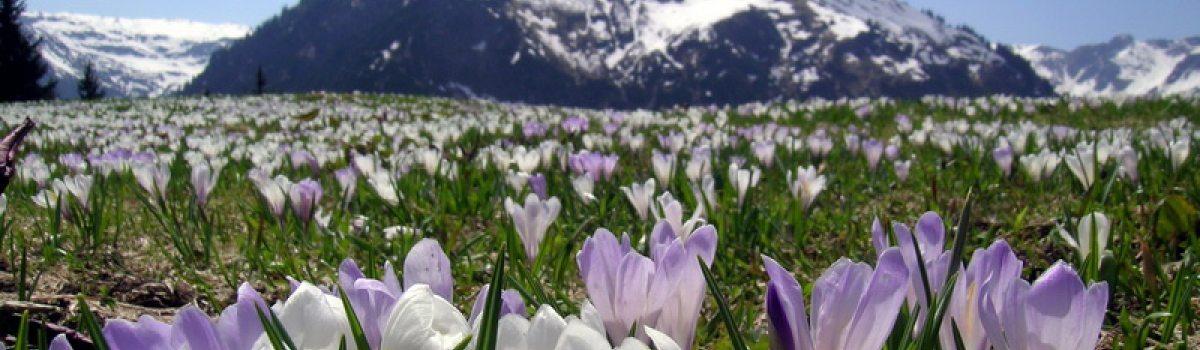 Frühlingsgrüße aus den Bergen