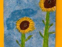 Sonnenblumen 20 21 (1)