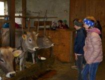 Bauernhofbesuch (5)