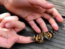 Schmetterlinge (4)