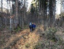 Wald18 (6)