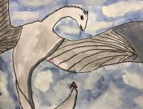 Drachen (3)