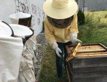 Bienenprojekt (2)