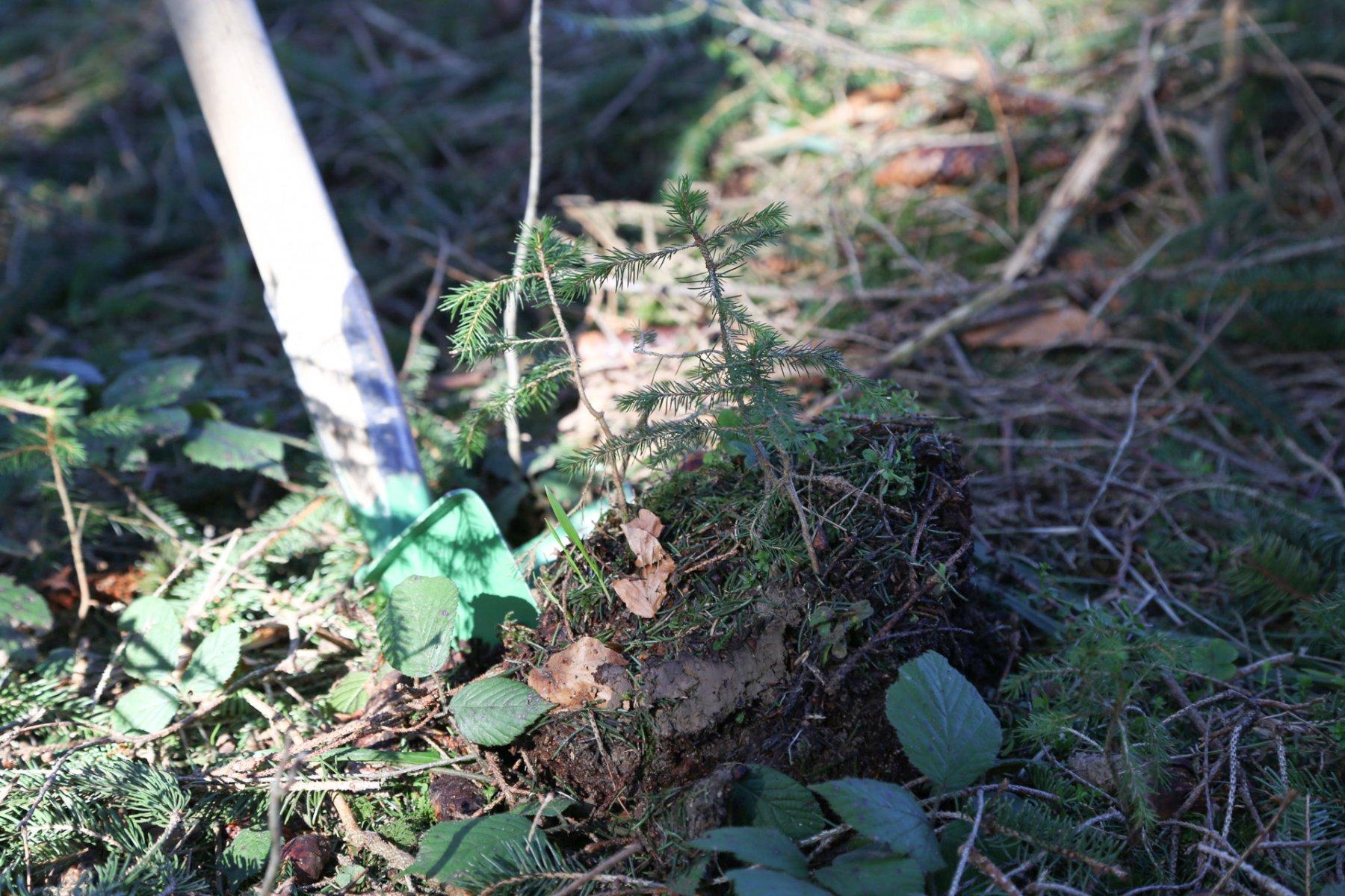 Bäumchen pflanzen 18.3.2020