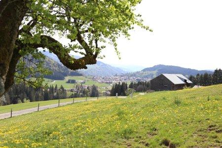 Oberstaufen Frühling