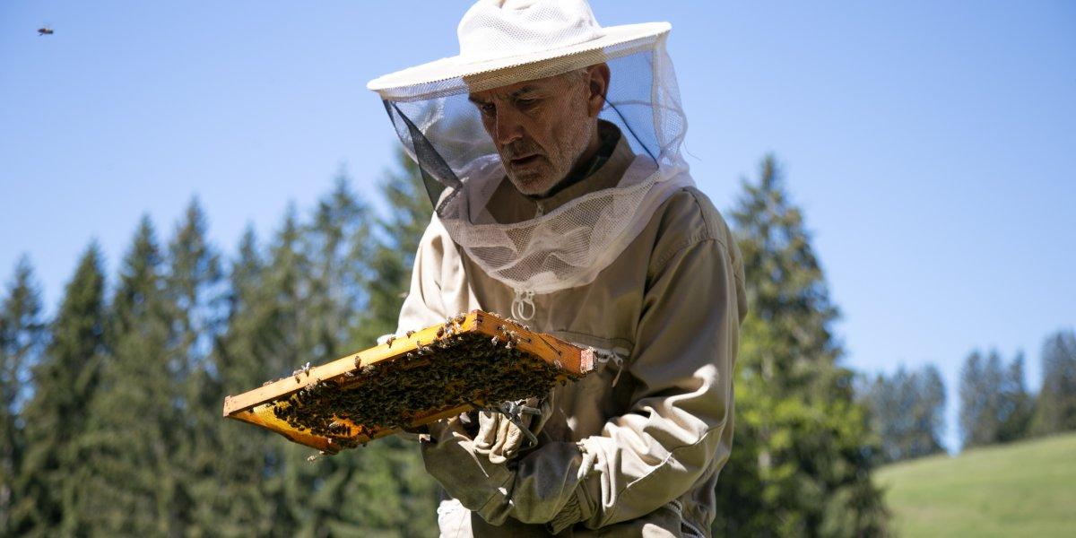 Einzug Bienen-64