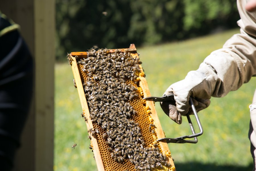 Einzug Bienen-73