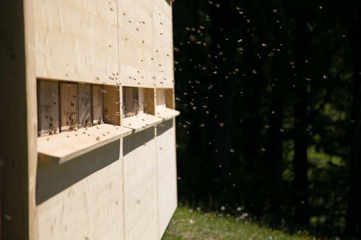 Einzug Bienen-86