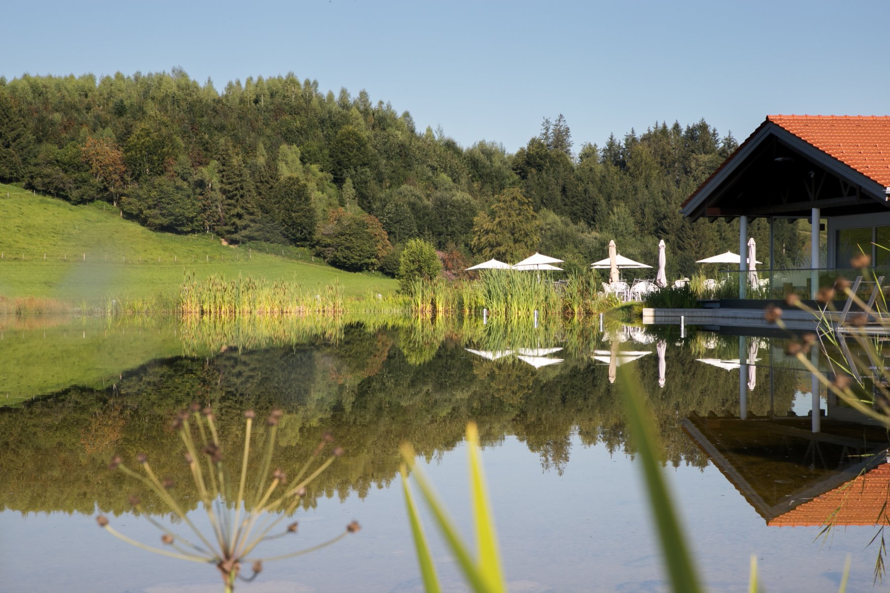 Natursee Sommer 2020-7