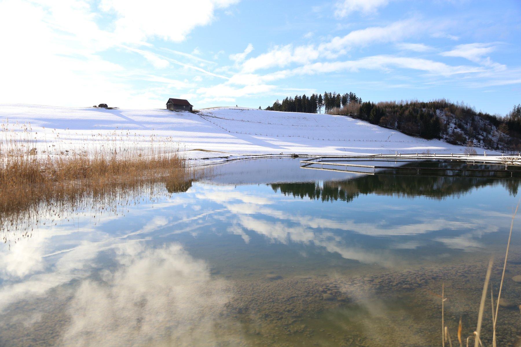 Spiegelung im Natursee