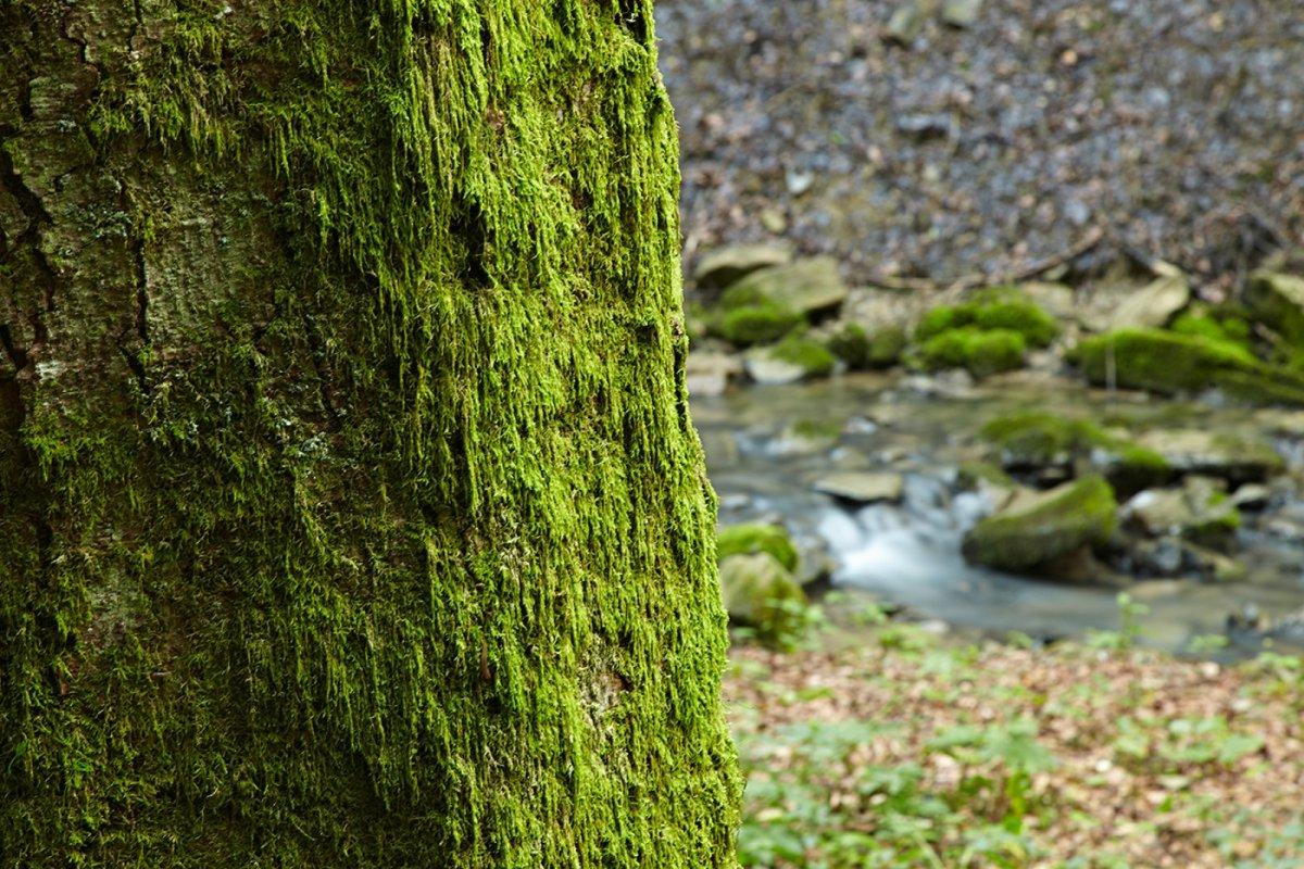 Der Jugetbach schlängelt sich entlang des Klimapfades durch den Meerauwald