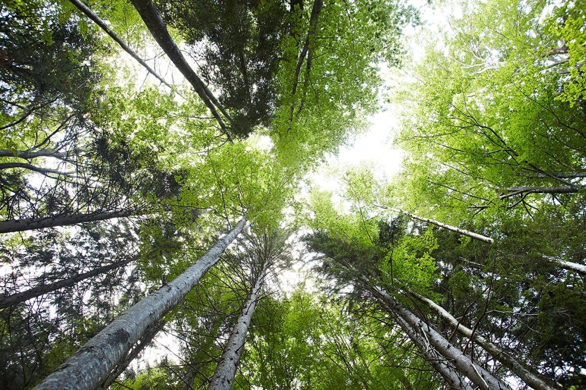 Eine weitere Hauberidee: Von den Waldhängematten aus - Blick in die Baumwipfel