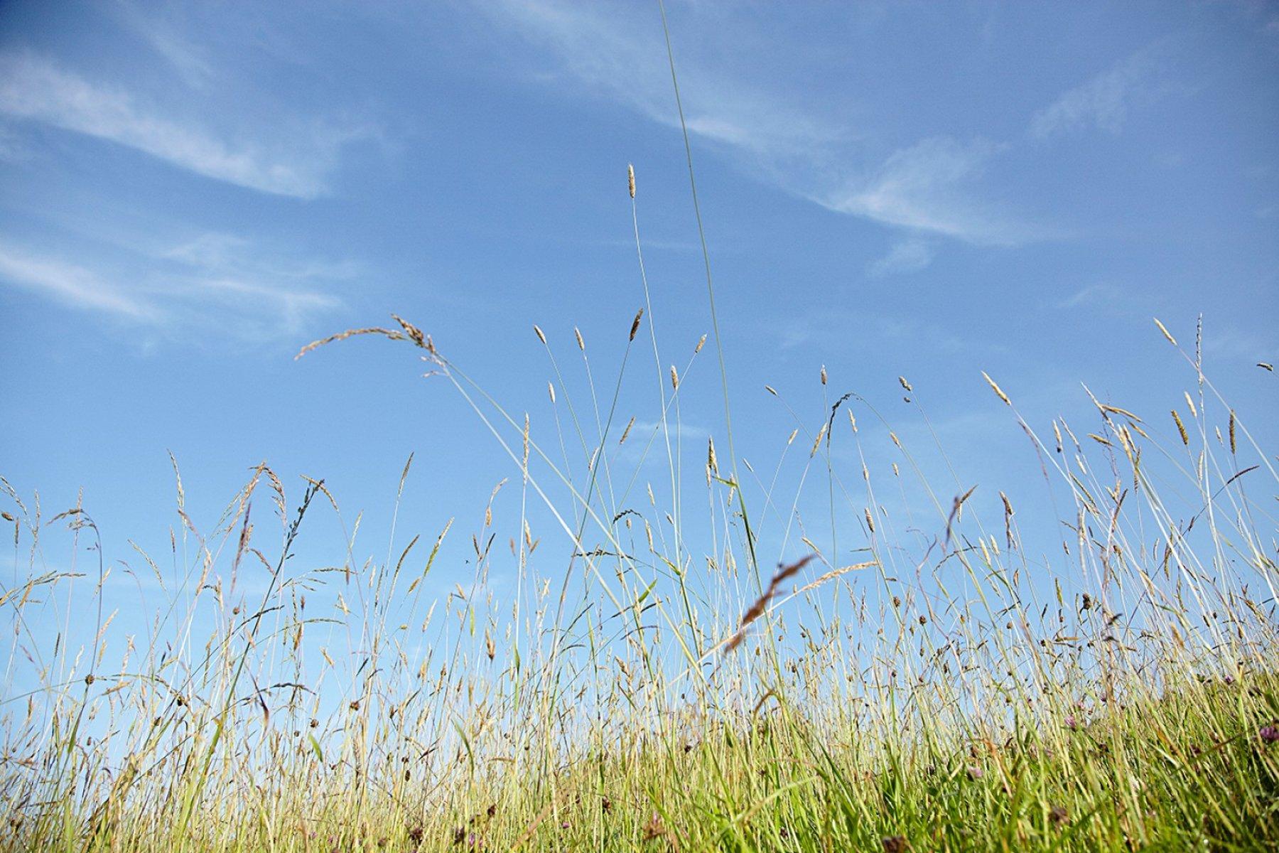 Die sonnige Südlage, die Höhenlage und die intensive Sonneneinstrahlung sind für die hohe Qualtität der Kräuter verantwortlich