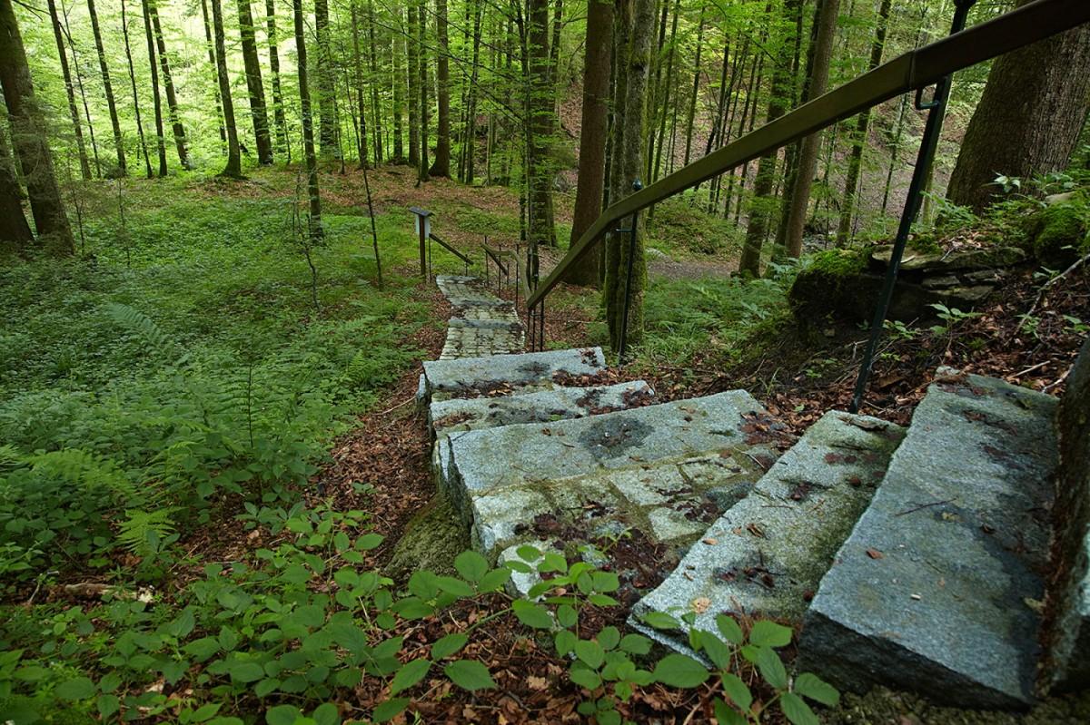 Waldtreppe am Klimapfad