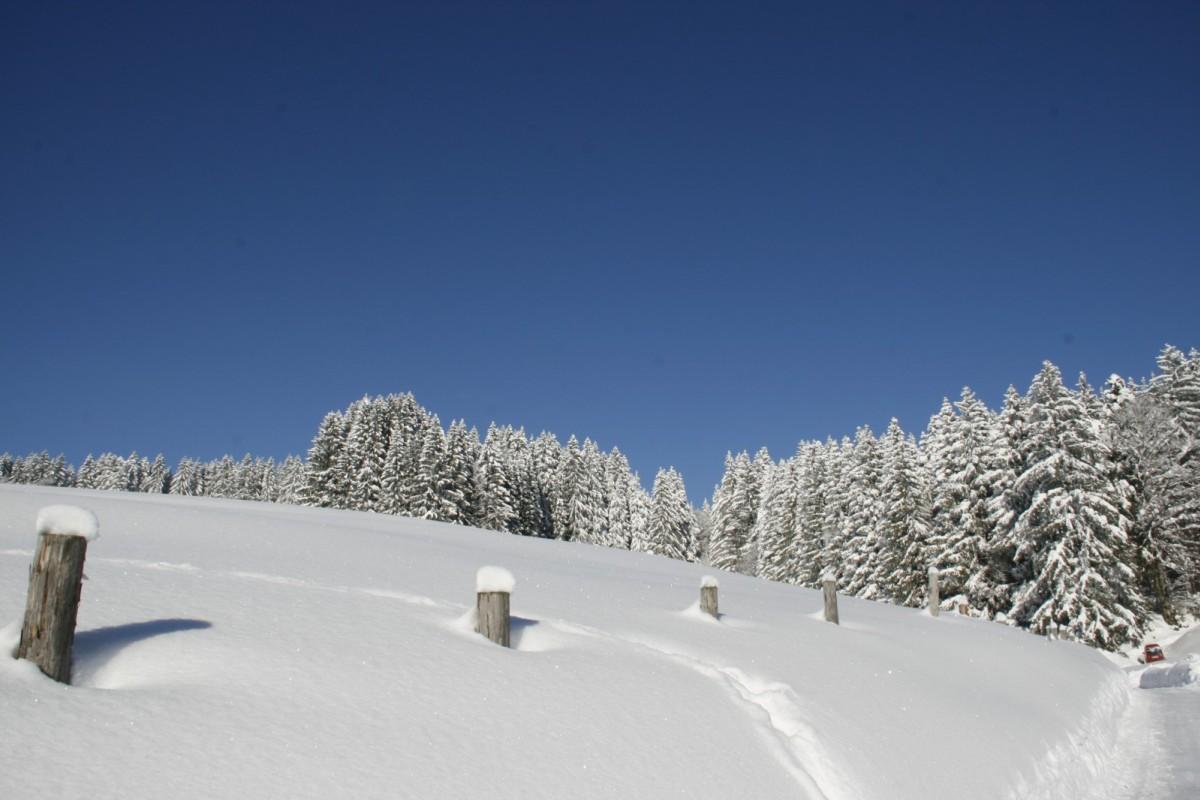 Gratis Skipässe und Bergbahnen, Langlaufen am Hotel, Schneeschuhwandern auf unserem Alpenresort, Laternenwanderungen über unseren Klimapfad zum Schwalbennest.